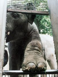 В Таиланде слон сделал селфи